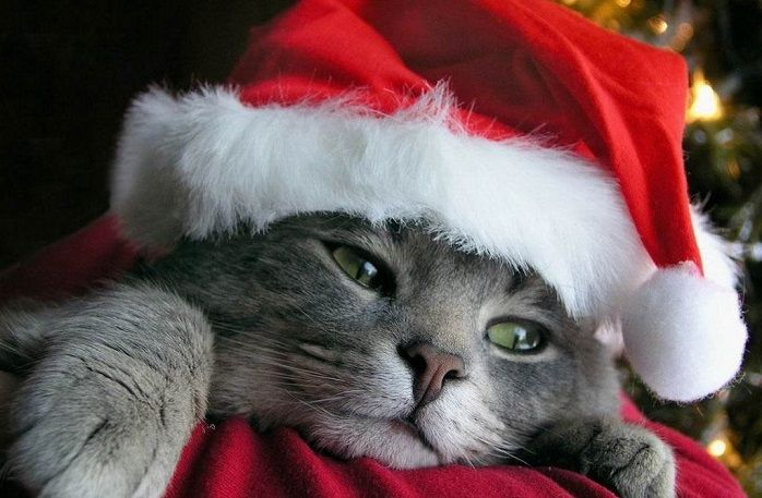 fondo-pantalla-gato-navidad-source_aes