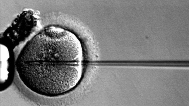 fecundacion-vitro-